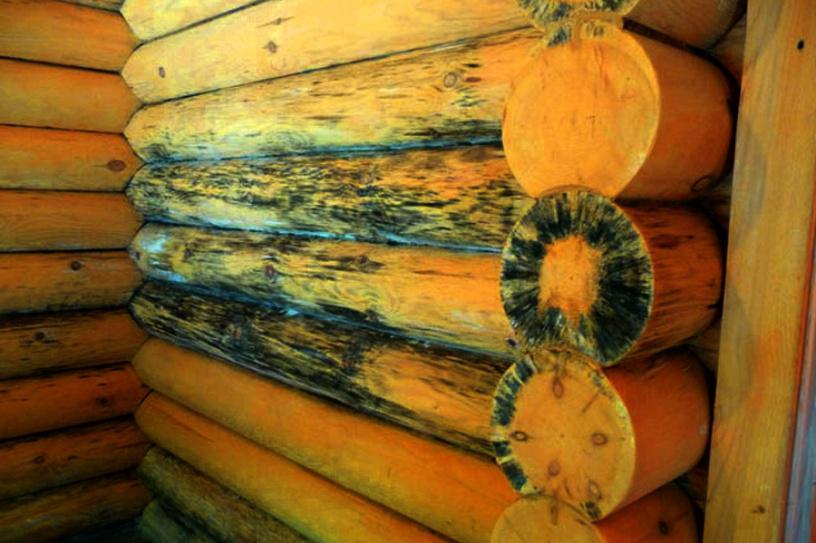 Фото распространения плесени по поверхности бруса
