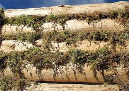 Изначально мох выглядит непрезентабельно, но как только займетесь отделкой фасада, все изъяны скроются