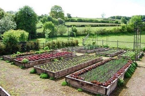 На фото: согласитесь, такой огород выглядит намного привлекательнее обычного варианта