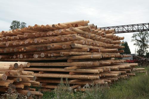 Перед дальнейшей обработкой стволы деревьев высушиваются