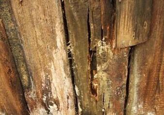 Результат воздействия влаги на древесину