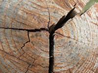 Щели и трещины – неизбежные спутники бревна.