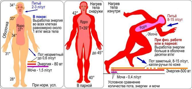 Сравнительные изменения некоторых параметров человека