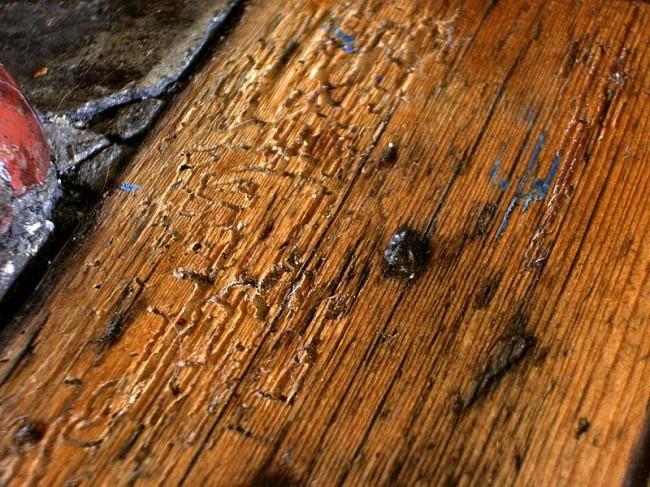 Стеновой материал, выеденный в труху