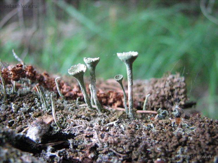 Увеличенное изображение колонии грибков.