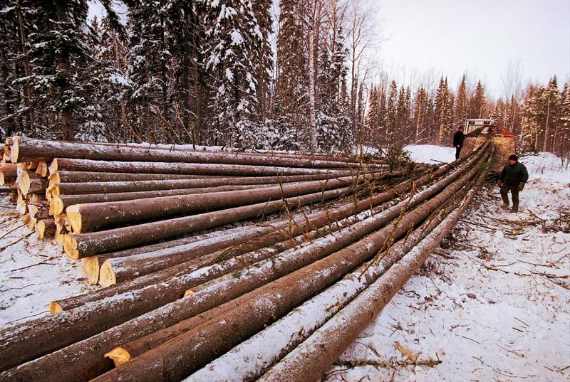 Заготовленные зимой брёвна меньше подвержены усадке