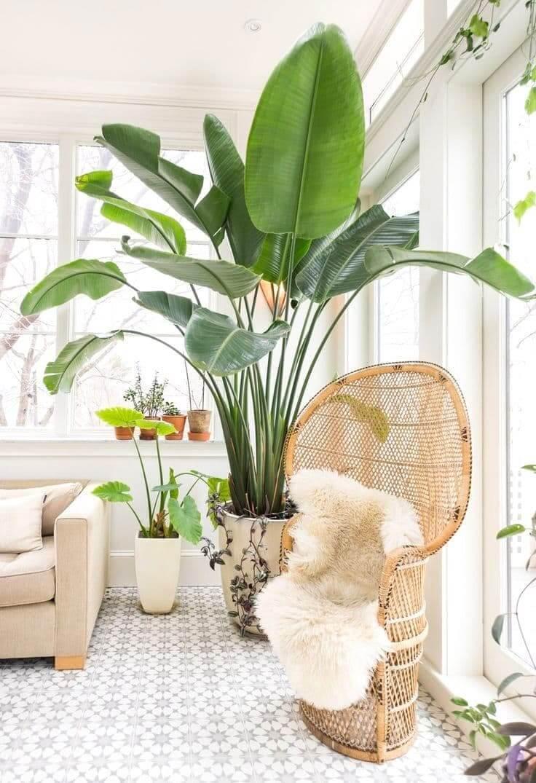 При правильной планировке в маленькую квартиру войдут даже большие растения