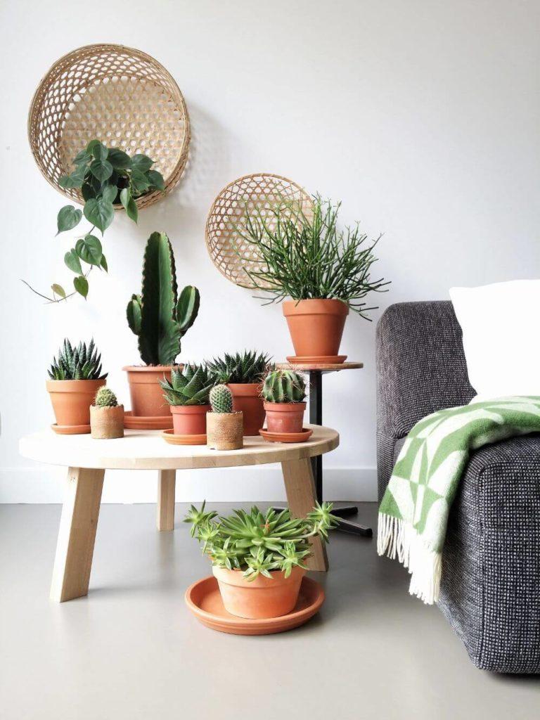 При аккуратном подборе комнатных растений других предметов декора обычно не требуется