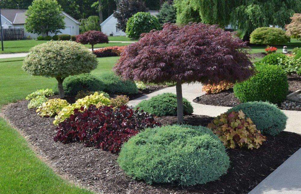 Внимательнее выбирайте растения для ландшафта