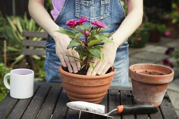 Растения хорошо себя чувствуют в горшках из глины