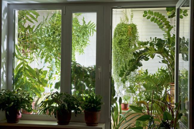 Зимний сад на балконе можно создать даже без серьёзного вмешательства в конструкцию дома