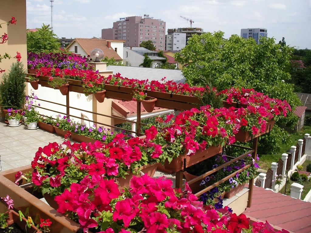 Петуньи на балконе