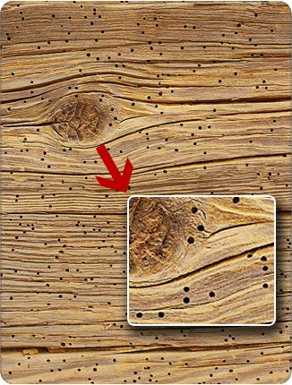 На фото – как повреждена древесина муравьями
