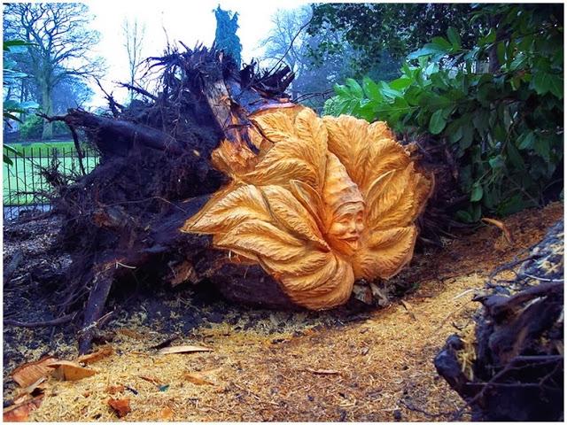 На фото – вывороченное ураганом дерево превратилось в украшение участка