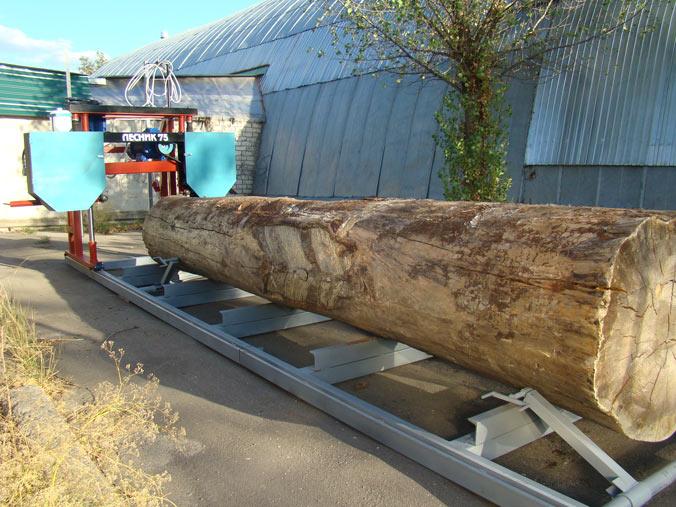 На фото ствол дерева, установленный в станок для продольной резки