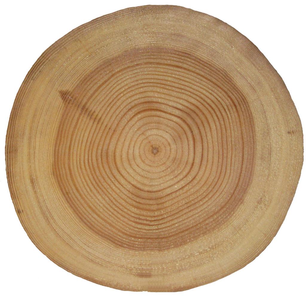 Неоднородность структуры древесины усложняет задачу ее распиловки.