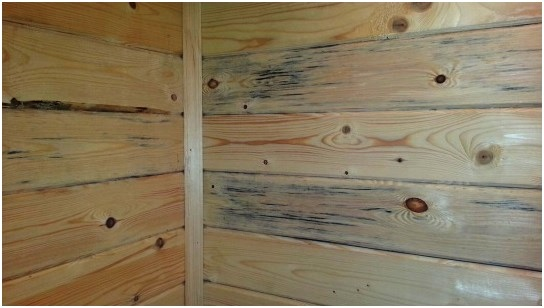 О появлении в доме плесени свидетельствуют темные пятна на стенах