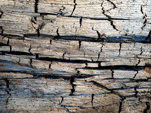 Пример поврежденной гнилью древесины