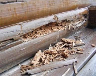 Разрушительное воздействие процессов гниения на стену деревянного дома