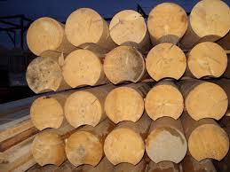 Стволы, обработанные таким образом, являются очень популярным строительным материалом.