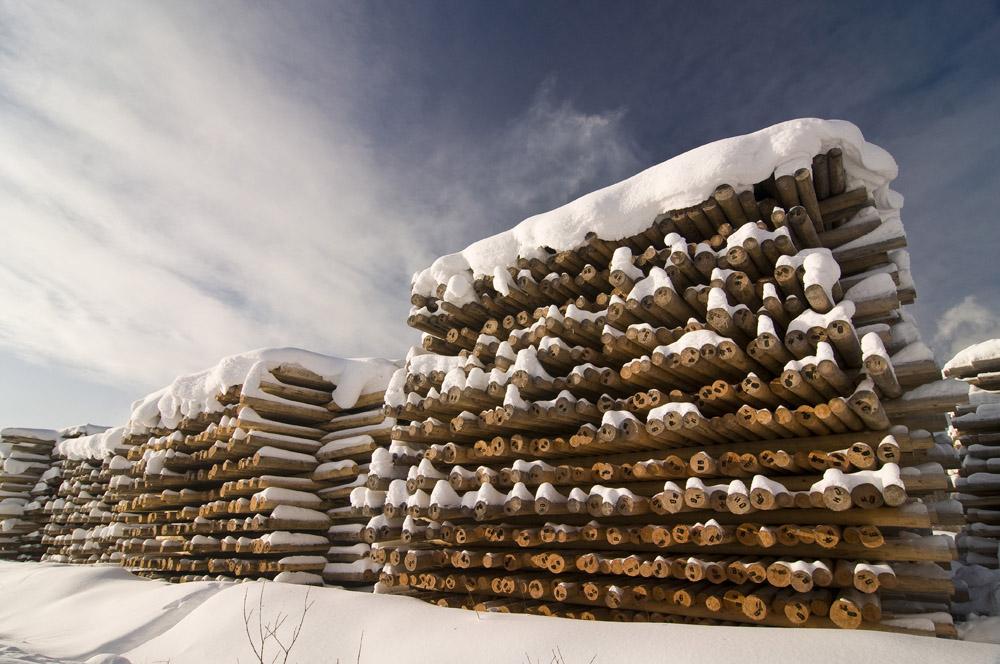 В будущем все эти древесные стволы превратятся в опоры