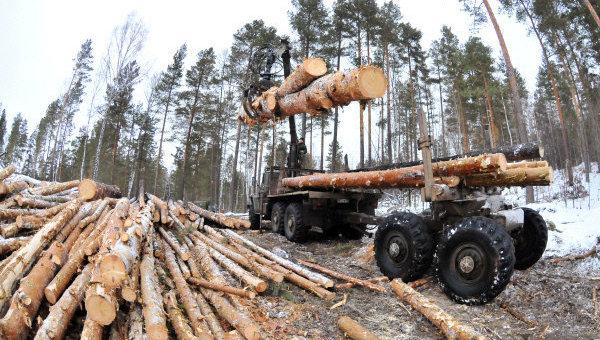 Зимняя рубка леса